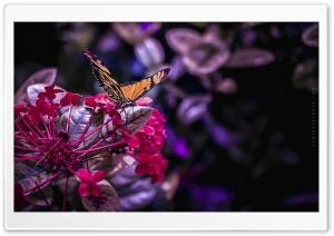 Butterfly - 2