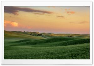 Green Wheat Fields near...