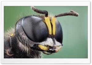Insect Eyes Macro