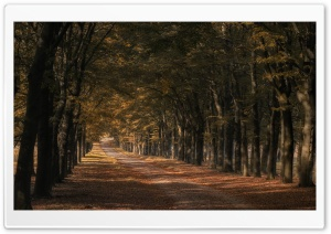 Trees Along the Road, Autumn