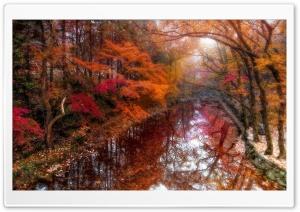 Fall, Trees, Nature