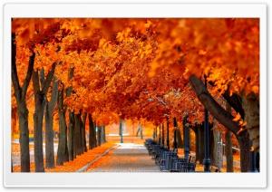 Orange Trees Fall