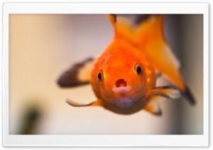 Goldfish Worried Face