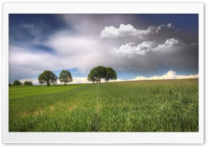 Trees On Fields Clouds