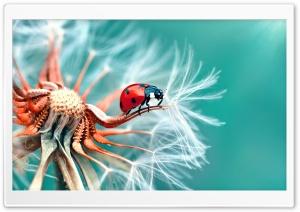 Ladybird on a Dandelion Seeds...