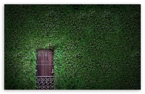 Download Green Wall UltraHD Wallpaper