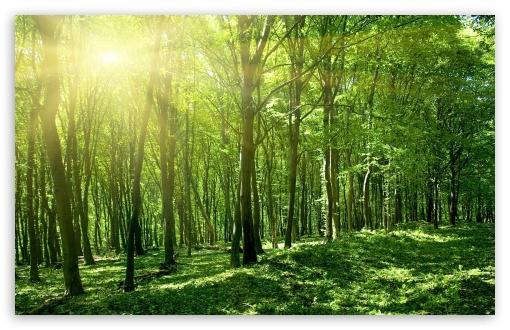 Download Sun Spring Green Forest UltraHD Wallpaper