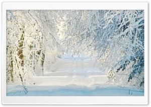 Snowy Road, Winter