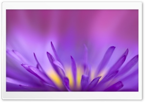 Delicate Purple Petals