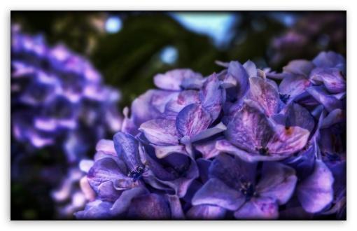 Download Dreamy Purple Flower UltraHD Wallpaper