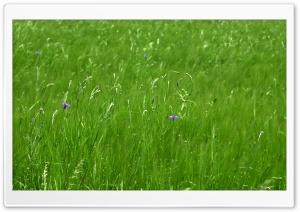 Green Pasture Spring