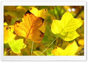Vivid Autumn Leaves