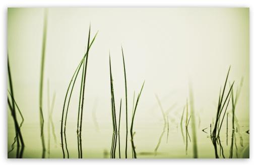Download Water Grass UltraHD Wallpaper