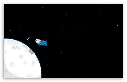 Download Funny Spacedog UltraHD Wallpaper