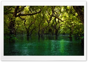 Forest over Water