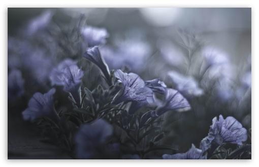 Download A Midsummer Nights Flowers UltraHD Wallpaper
