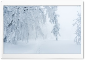 Winter Snow White Fog Scenery