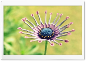 Interesting Flower, Macro