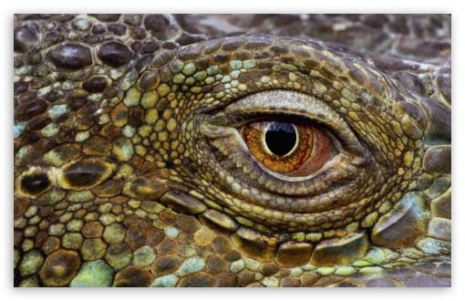 Download Crocodile Eye UltraHD Wallpaper