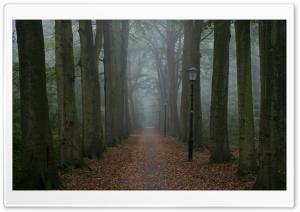 Foggy Gloomy Day