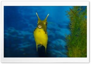 Funny Sea Creature