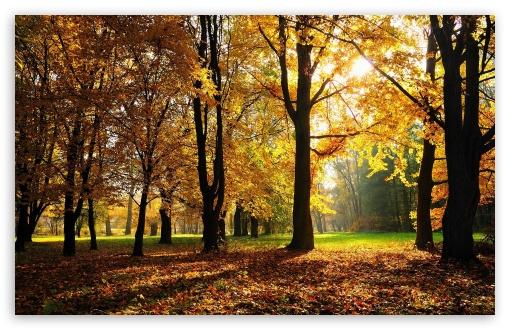 Download Beautiful Fall Trees UltraHD Wallpaper