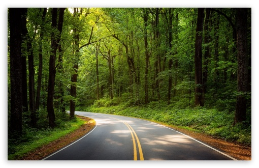 Download Road, Green Trees, Forest UltraHD Wallpaper
