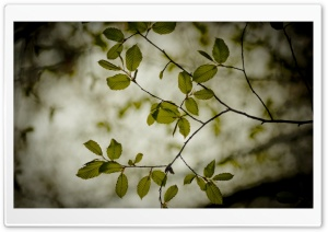 Twigs With Green Leaves