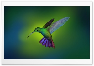 Beautiful Hummingbird Art