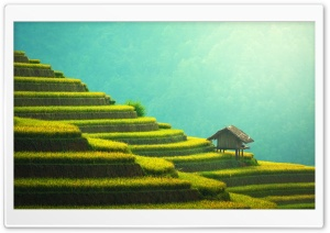 Rice Terraces Mountain Landscape