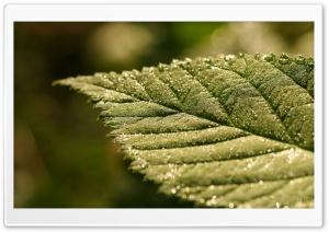 Sparkle Bokeh On Leaf