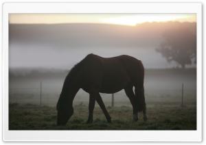 Morning Mist Horse