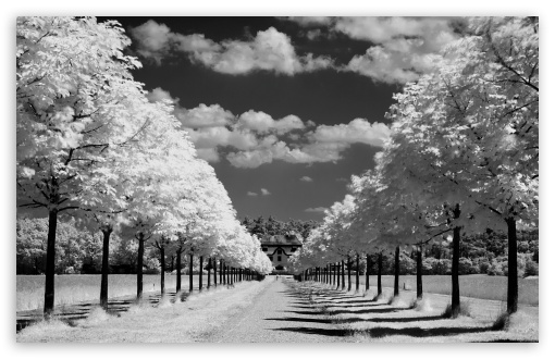Download Infrared Photo UltraHD Wallpaper
