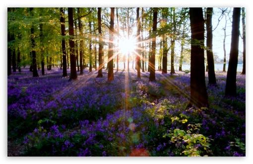 Download Forest Lens Flare UltraHD Wallpaper