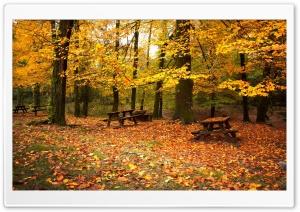 Romantic Fall