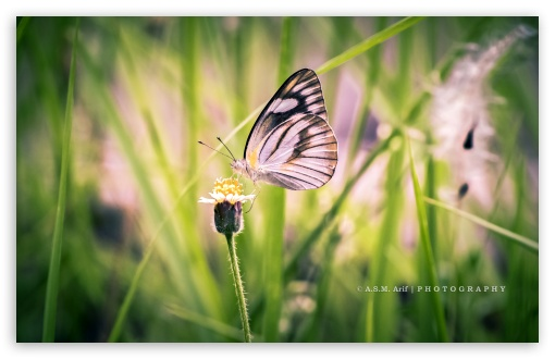 Download ButterflyAlbatros UltraHD Wallpaper