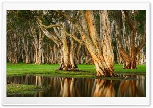 Old Trees Swamp