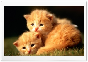 Two Baby Kittens