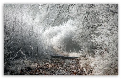 Download Winter Path UltraHD Wallpaper