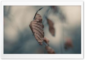 Dried Leaf Macro