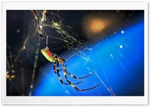 Nephila Clavata Spider