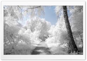 Beautiful Infrared Landscape