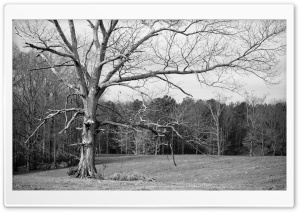 Randolph County Winter Scene