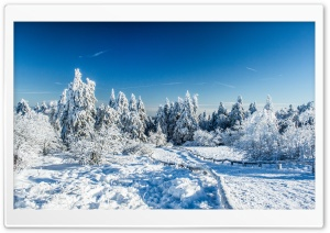 Wonderland Winter