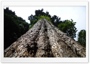 The Biggest Tree