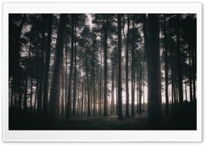 Woodland, Trees, Morning