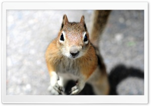 Close-up Of A Squirrel's...