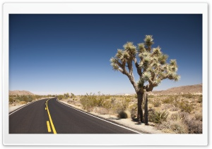 Joshua Tree Desert Road