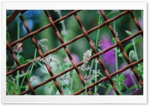 Through a Rusty Fence
