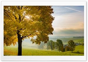 Yellow Tree, Autumn, Fall,...